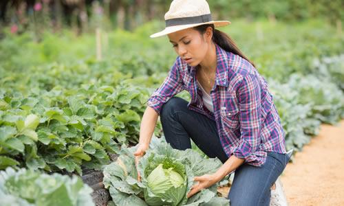 Imagem do curso Mba em Marketing e Gestão do Agronegócio