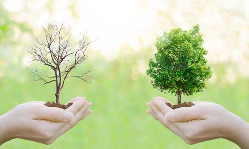 Imagem do curso Gestão Ambiental